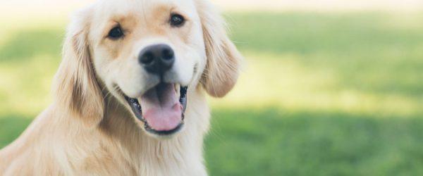 pet health insurance in Flemington NJ | Cedar Risk