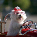 dog-firetruck